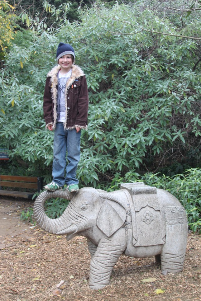 Elephant Ride?